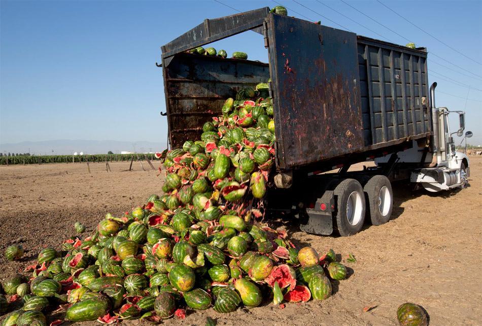 Truck offloading broken watermelons onto ground