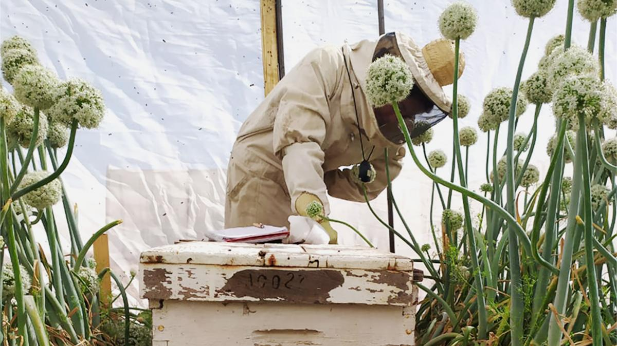 person in beekeeping suit checking a beehive