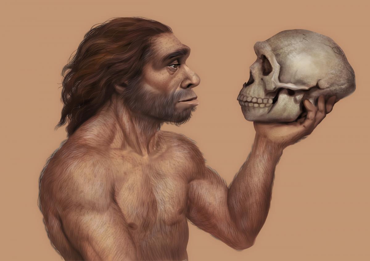 neanderthal looking at skull
