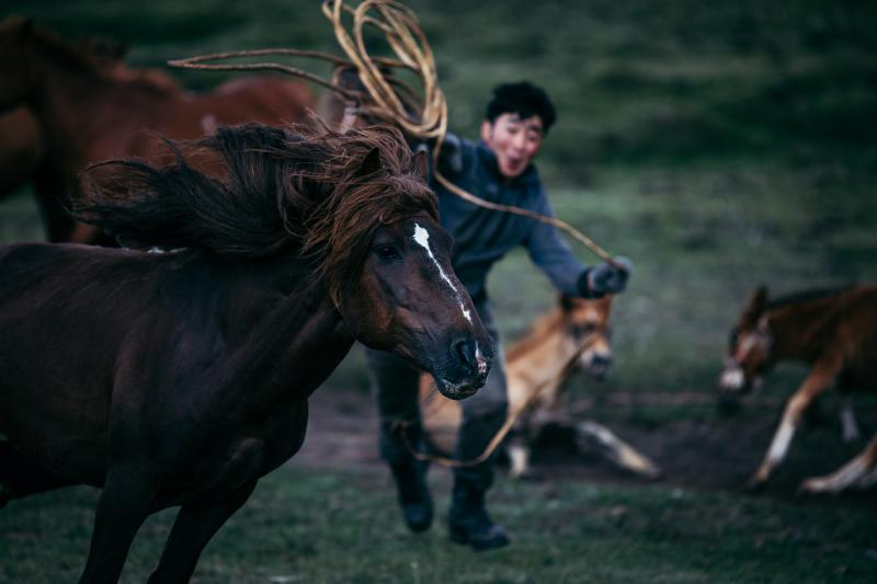 A scene from a mare's breaking. The horse is trained to carry a rider in the saddle.