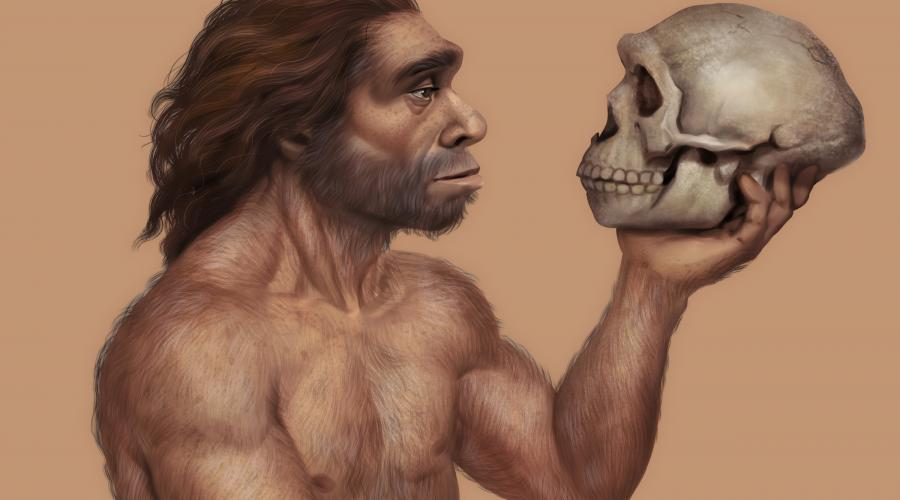 neanderthal looking at skull