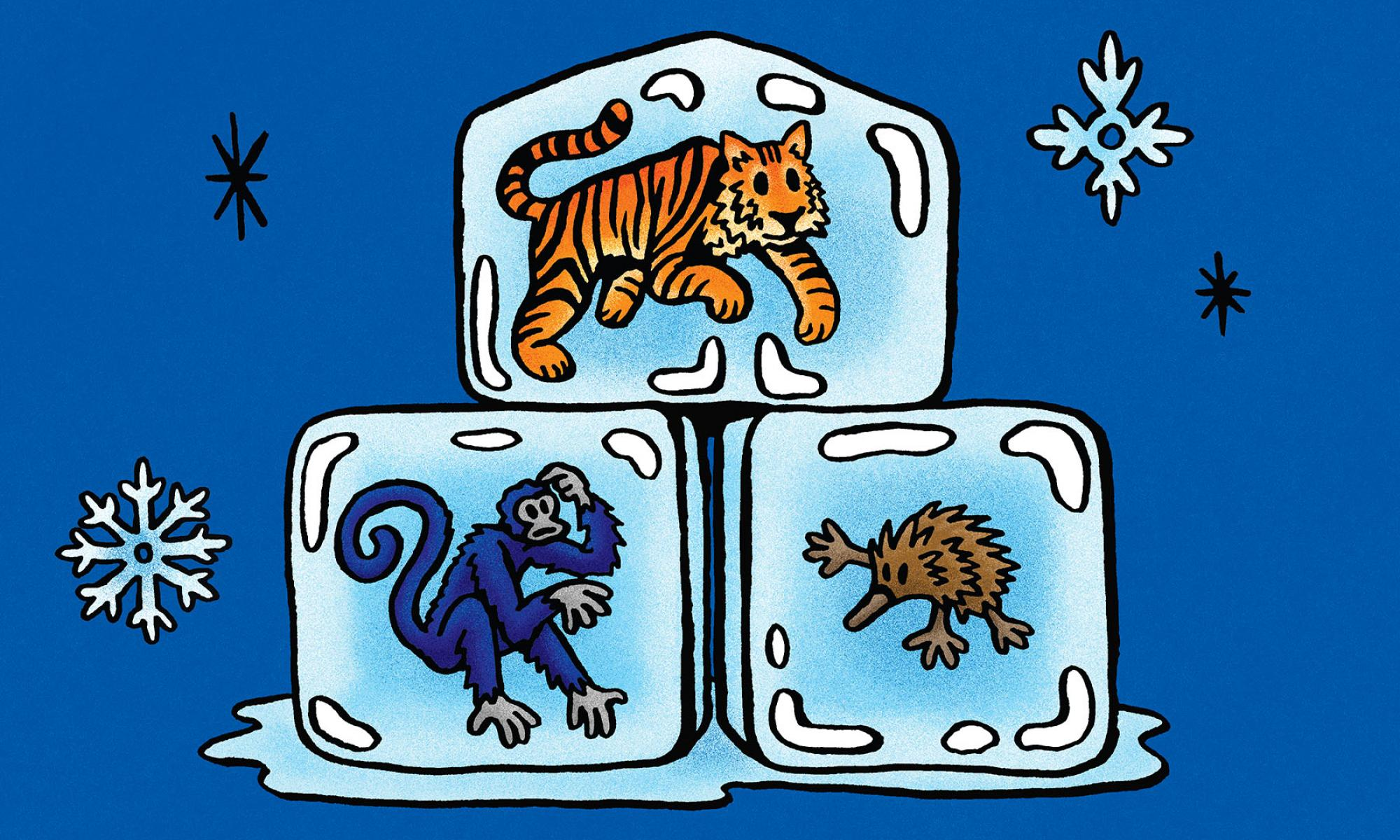 Illustration of the Siberian tiger, the Colombian spider monkey and the long-beaked echidna, each embedded in a cube of ice against a blue background decorated with snowflakes