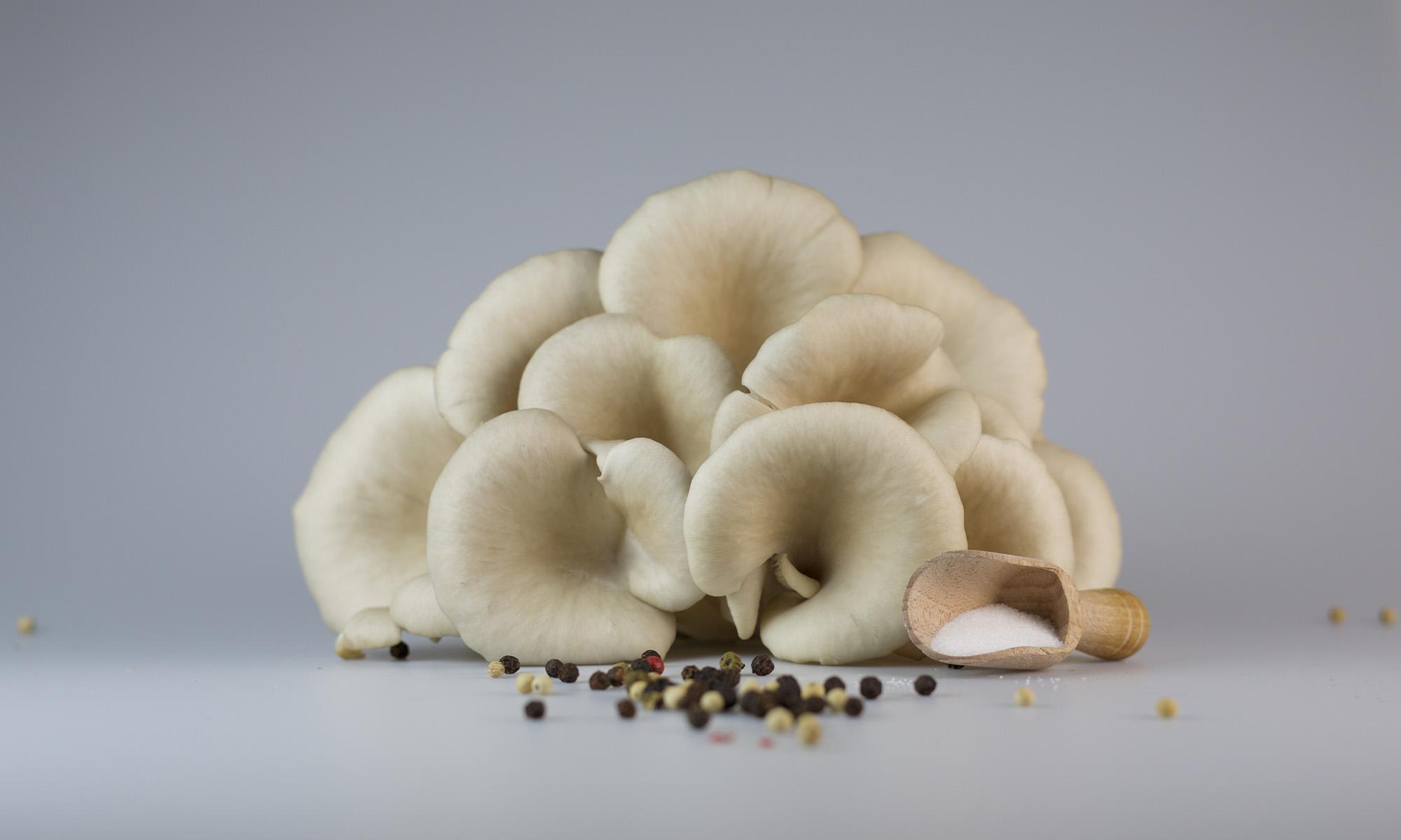 oyster mushrooms, grey background